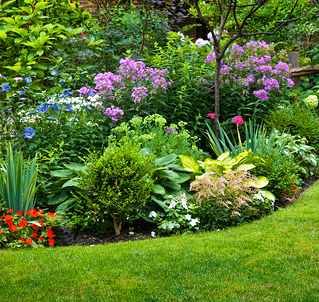 9 Ways to Save When Landscaping Your Yard Garden Image