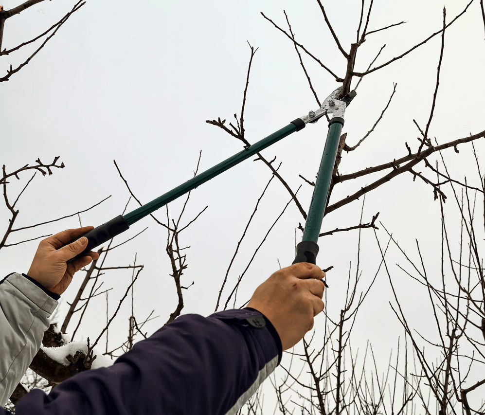 Get Ready For The Snow: Winter Prep Checklist Cutting Branches Image
